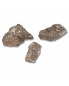 Dinosaur Bone Fragments – 3 Pieces