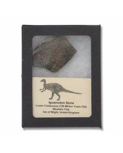 Iguanodon Dinosaur Bone