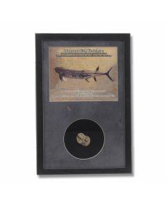 Dinosaur Fish Vertebrae Fossil Display