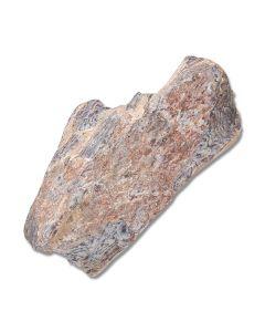 Daspletosaurus Dinosaur Bone